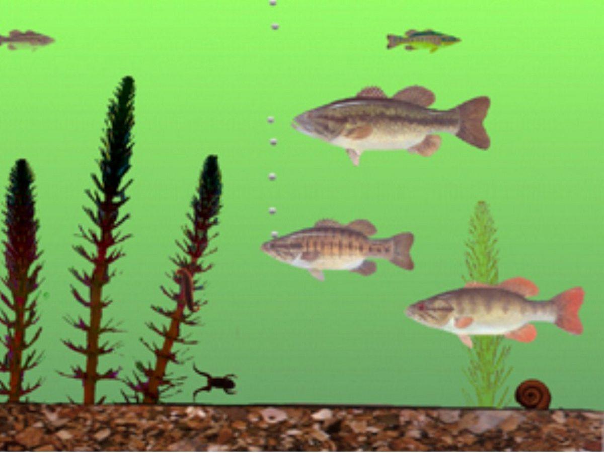 Michigan fish test