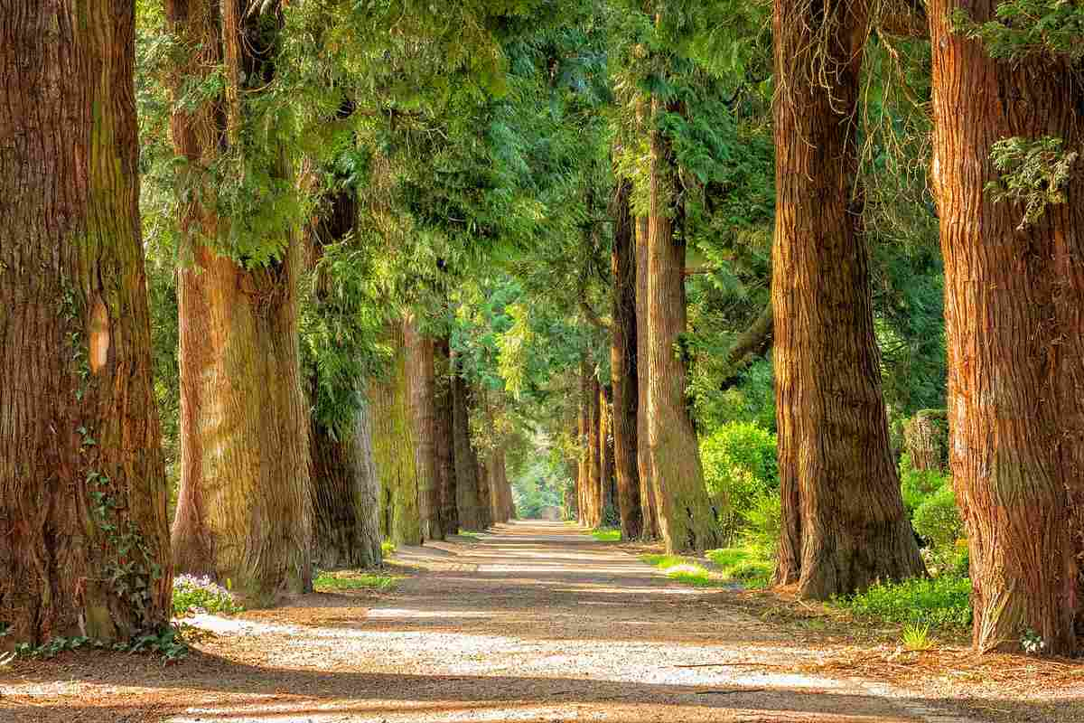 esl writing long road