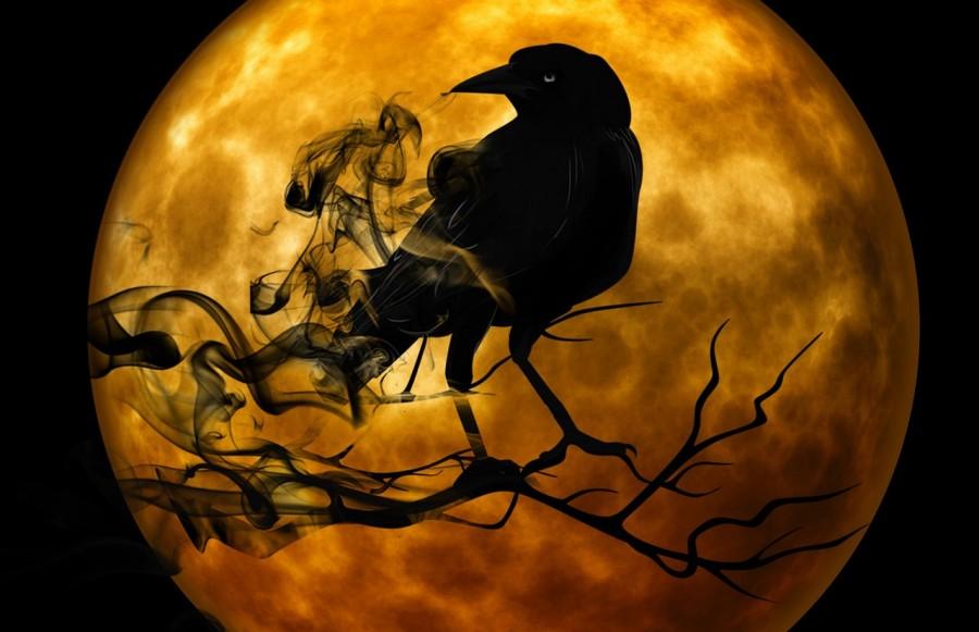 raven-988218_1280